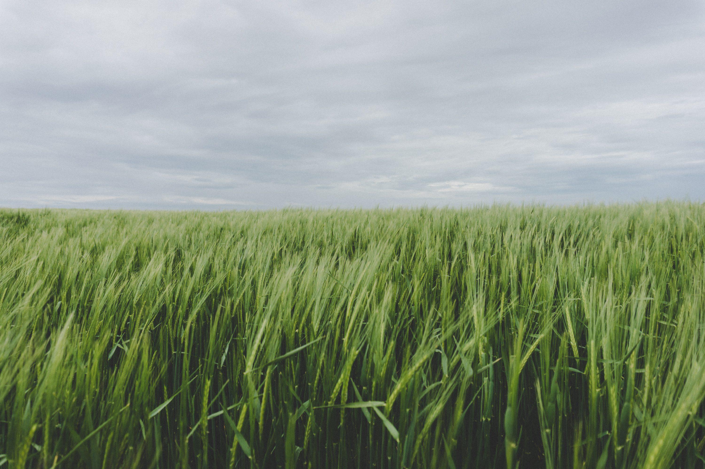 Perceptia Grupurilor de Actiune Locala asupra asocierii agricultorilor