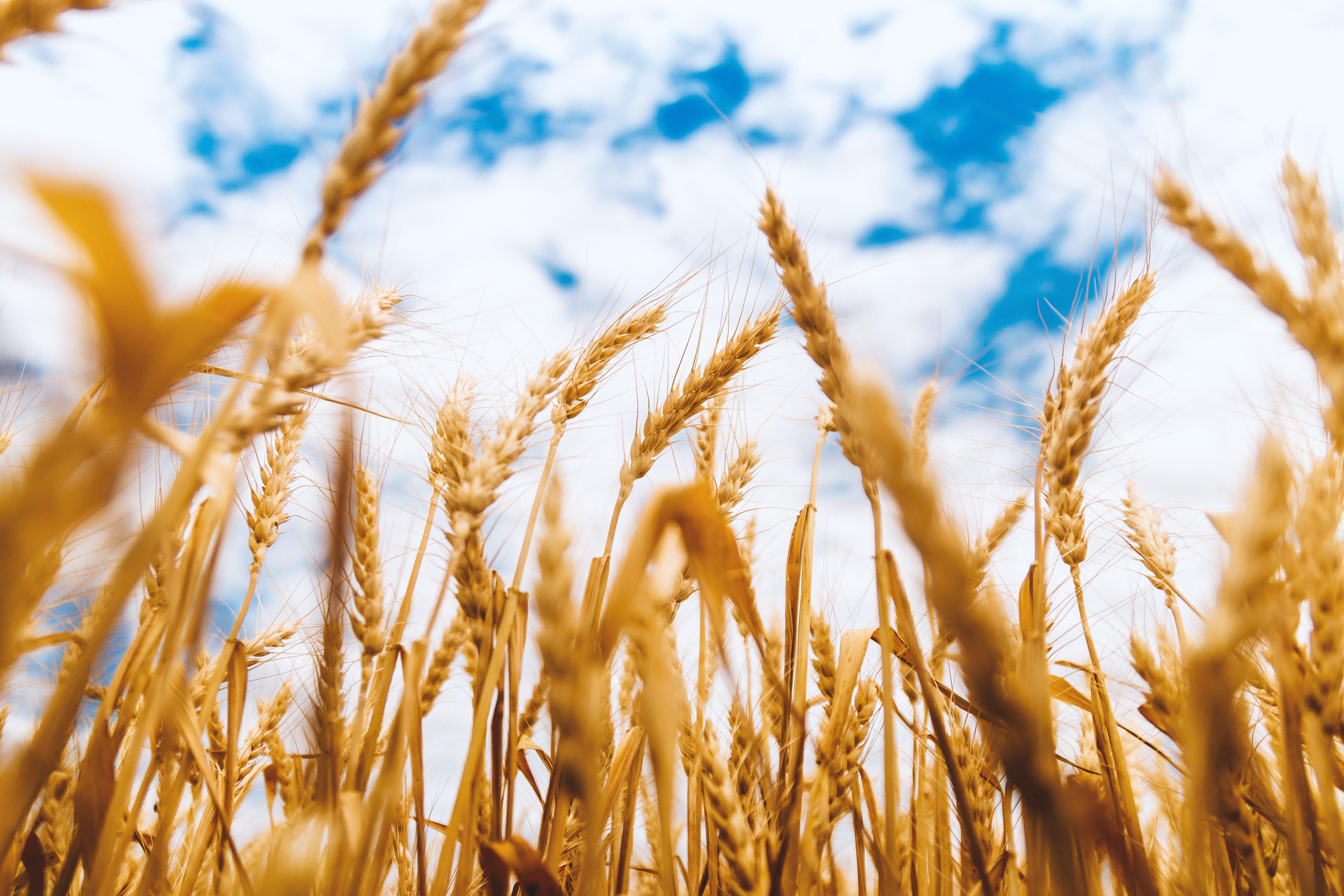 Rolul food hub-urilor regionale in sprijinirea micilor fermieri in SUA