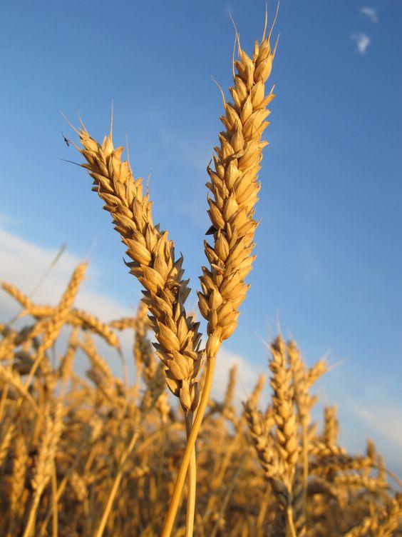 Advocacy pentru creditarea echitabilă a agriculturii mici și mijlocii în România
