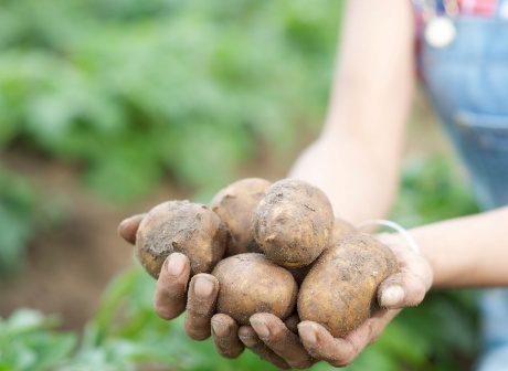 De ce nu este atractivă asocierea în agricultură?