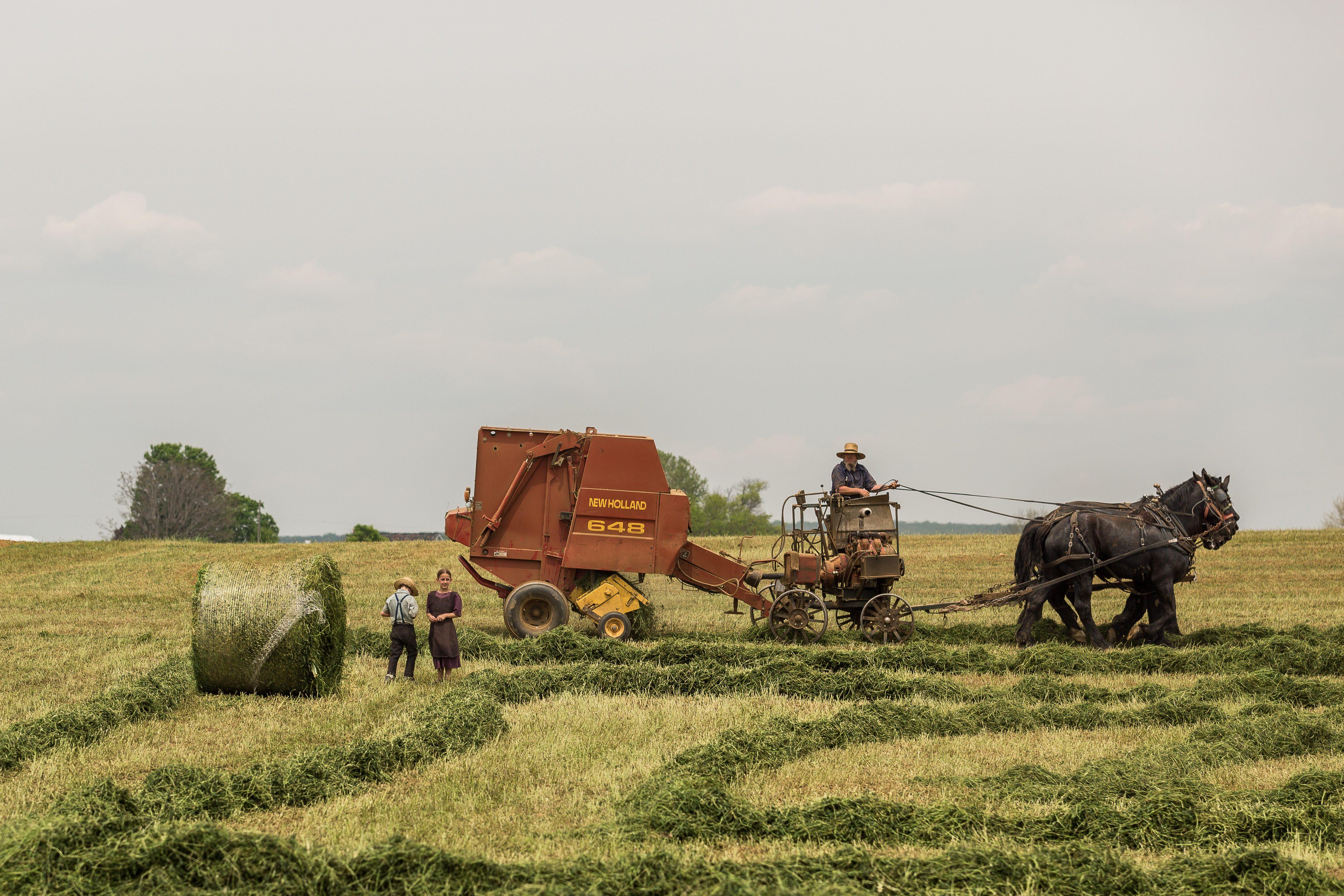 Politici publice pentru viitoarea generație de fermieri a României