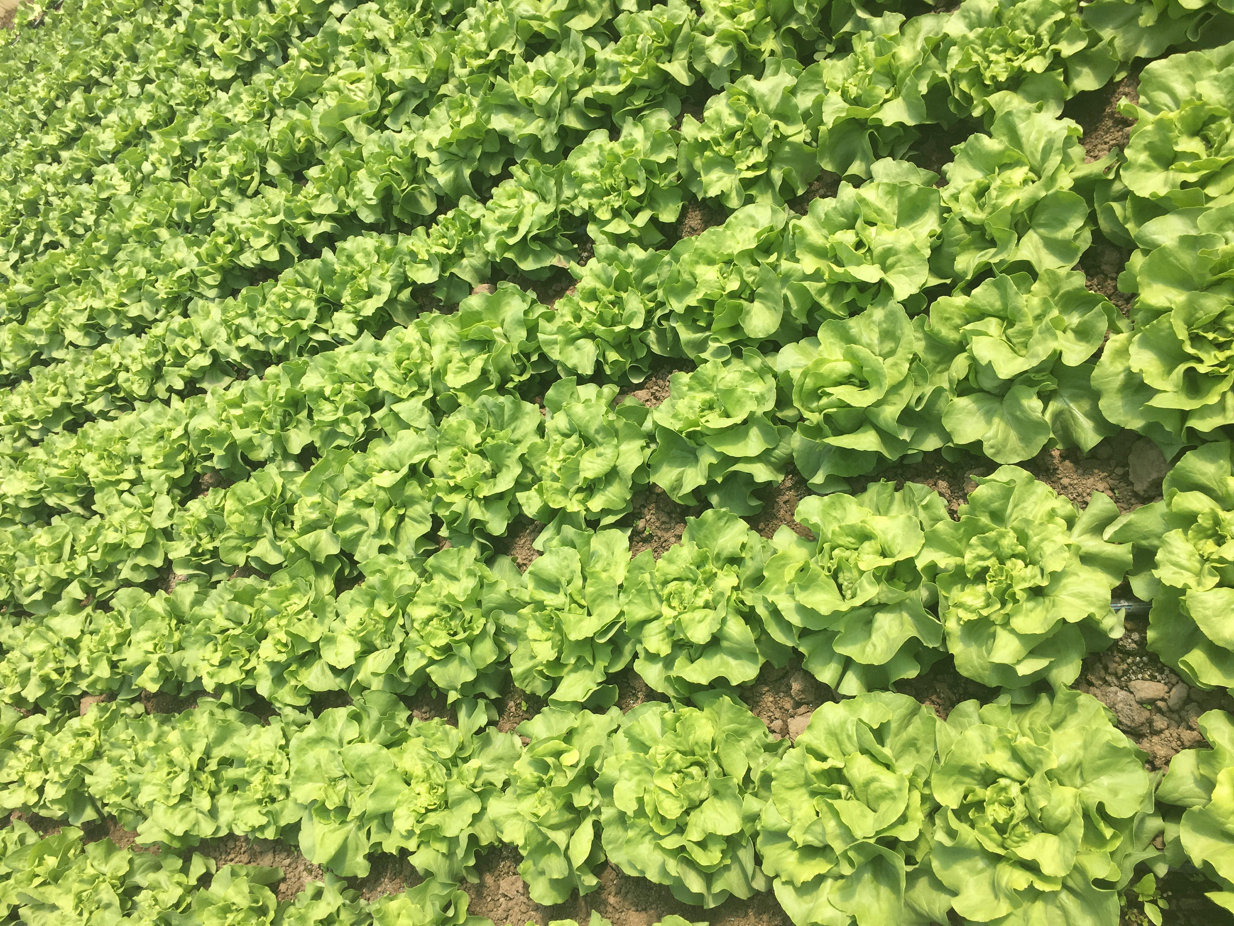 Crearea și dezvoltarea cooperativelor agricole