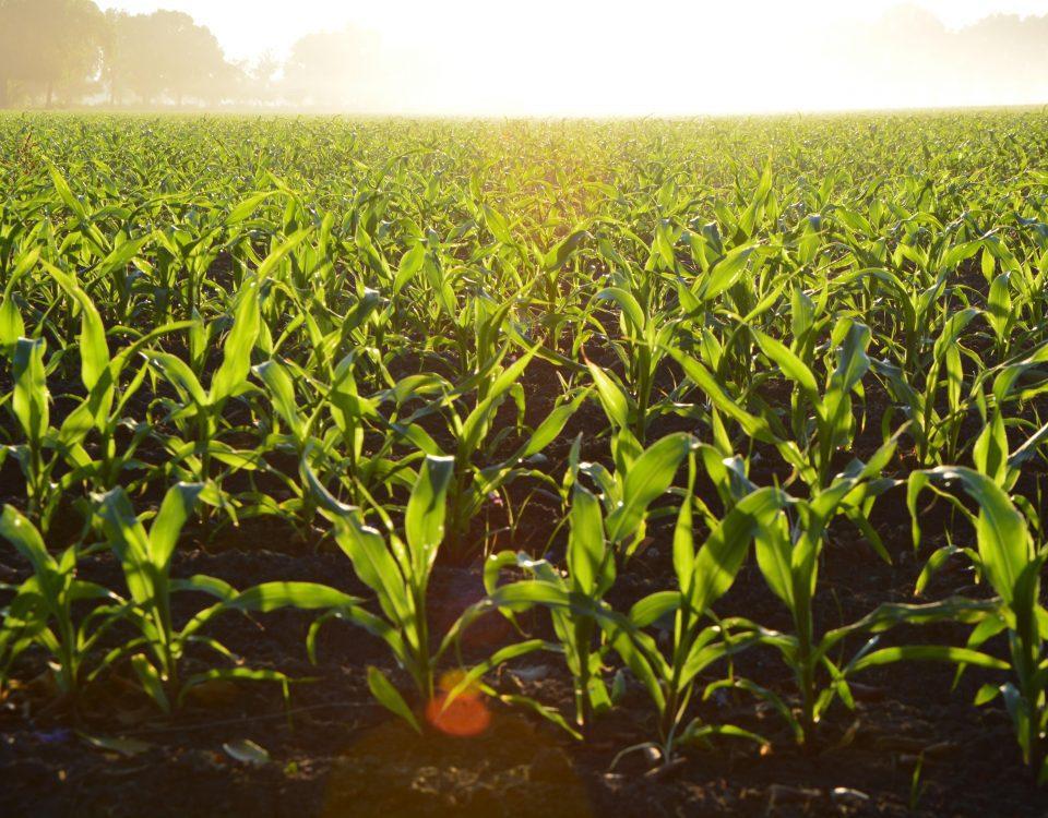 Consolidarea exploatațiilor agricole, şansa fermelor mici și mijlocii